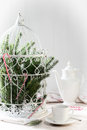 Pine branches birdcage filled with and candy canes for the holiday season Royalty Free Stock Photography