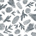 Pine branches and cones seamless pattern. Hand drawn spruce coniferous forest elements. Vector sketch illustration