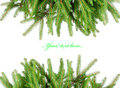 Pine branches isolated on white Stock Image