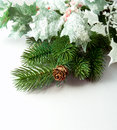 Pine branches and pine cones on white background Royalty Free Stock Photos