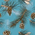 Pine branches seamless colored wallpaper and winter forest cones vector illustration Royalty Free Stock Photography