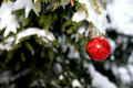 Pine and christmas ball Royalty Free Stock Photography