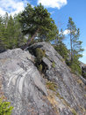 Pine on the cliff Royalty Free Stock Photos