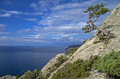 Pine on the cliff above the sea relict rock crimea black coast Stock Photography