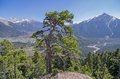 Pine on the cliff top. Caucasus, Russia. Stock Photos