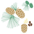 Pine cone cedar tree isolated objects on white background vector illustration eps Royalty Free Stock Photo