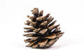 Pine cone Royalty Free Stock Photo