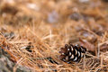 Pine Cone Framing Forest Floor...