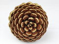 Pine cone tip Royalty Free Stock Photo