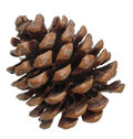 Pine cone isolated on white Royalty Free Stock Image