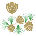 Pine cone larch tree isolated objects on white background vector illustration eps Stock Photos