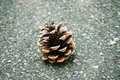Pine cone on the road Royalty Free Stock Photo