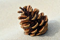 Pine cone on the sand Royalty Free Stock Photo
