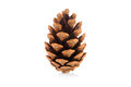 Pine cone on a white background Stock Image