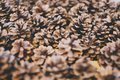 Pine cones background of real big brown Stock Photography