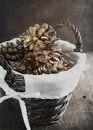 Pine cones in basket toned image Stock Photos