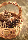 Pine cones in basket on wooden background Royalty Free Stock Photo