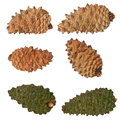 Pine cones collection isolated on white background with clipping path Stock Image