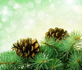 Pine cones and fir-tree Stock Photo