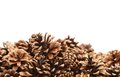 The pine cones are located down white background Stock Photos