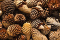 Pine cones nice dry some open up Stock Photo