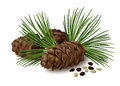 Pine cones with nuts and pine needles on white background