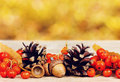 Pine cones, oak acorn and rowanberry on wooden board against bokeh background Royalty Free Stock Photo