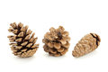 Pine cones three open and closed Royalty Free Stock Images