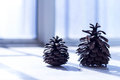 Pine cones two cute one is big one is small Royalty Free Stock Images