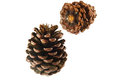 Pine cones on white background Stock Images