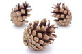 Pine cones on white background brown Stock Image