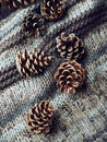 Pine cones on a woolen fabric top view Stock Photography