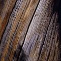 Pine cortex Royalty Free Stock Photo