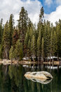 Pine, fir and sequoia forest on a lake