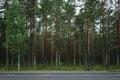 Pine forest behind asphalt road in Karelia
