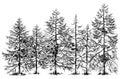 Pine forest border