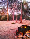 Pine forest lit by the sunset, barbecue with a cauldron on the fire.