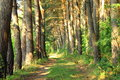 Pine forest road beautiful summer landscape Royalty Free Stock Photos