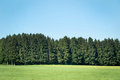 Pine forests landscape with blue sky Stock Photos