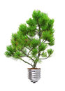 Pine growing from the base of the light bulb isolated over white Royalty Free Stock Image
