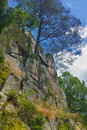 Pine grows in a rock in the mountains of the black forest Royalty Free Stock Photos