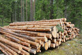 Pine Logs in Green Forest Stock Images