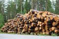 Pine logs stacked by the roadside for collection sweden Royalty Free Stock Image