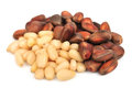 Pine nut Stock Image