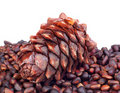 Pine nuts Royalty Free Stock Photo