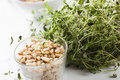 Pine Nuts and Plant of Thyme Stock Images