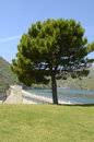 Pine in reservoir istan a villege next to marbella malaga andalusia spain Royalty Free Stock Photos