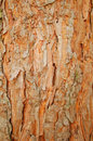 Pine rind brown close up background Stock Images