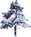 Pine in snow isolated on white background Royalty Free Stock Photo