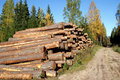 Pine Timber Logs by Rural Road in Autumn Stock Photos
